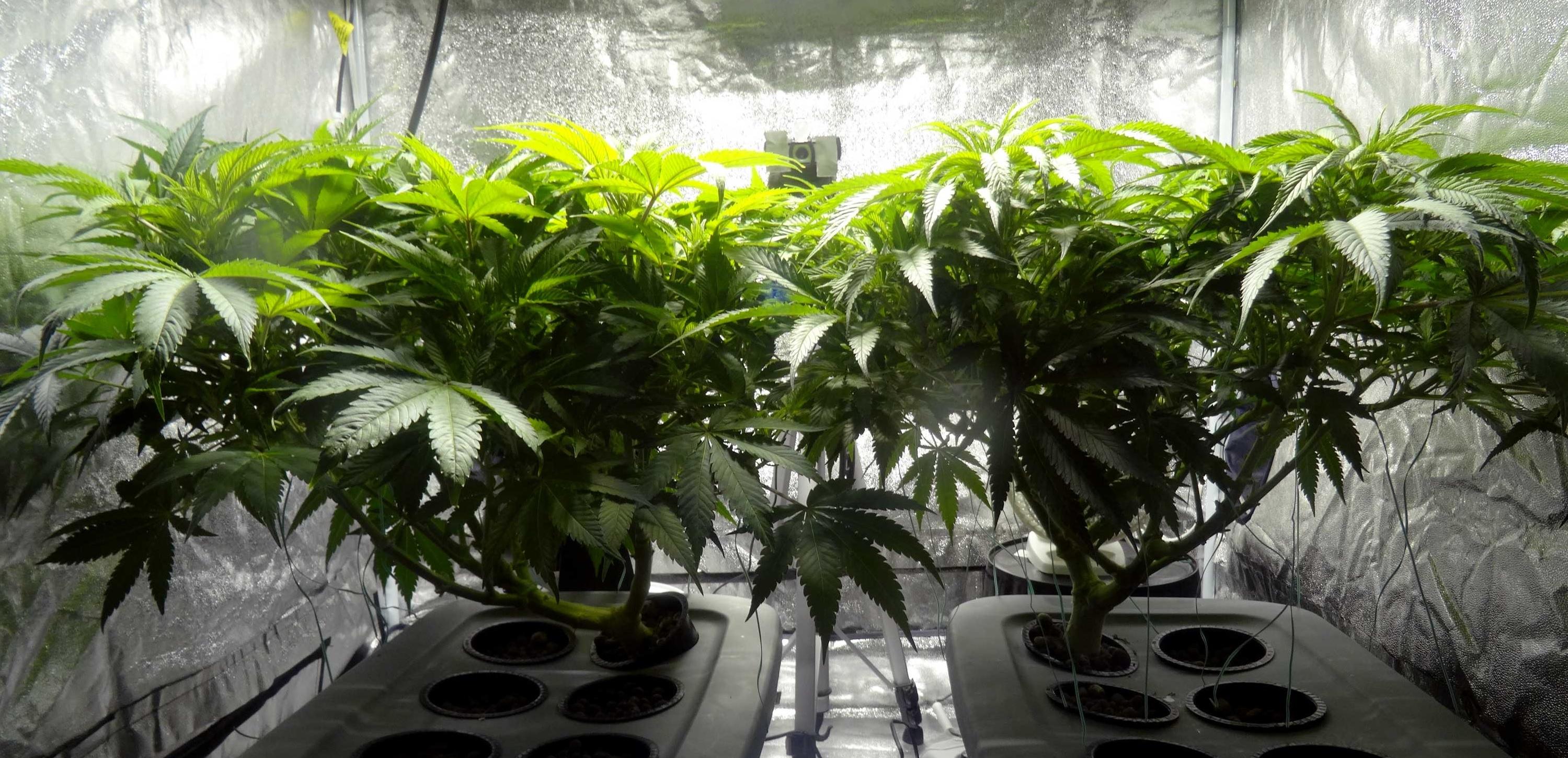 Właściwe oświetlenie roślin